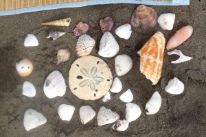 Another aspect on which we agreed was living on the beach. Here are random shells from a beach day.